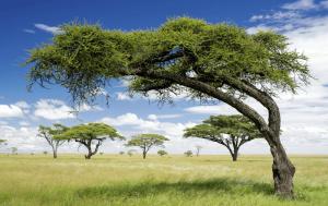 blackwoodtree